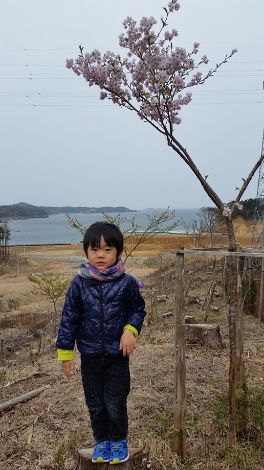 20年後に紡がれる桜と息子の物語