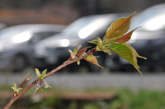 2012.04.30 春のつぼみ