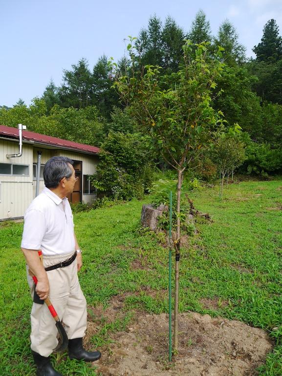 八坂神社から始まる沼袋の桜