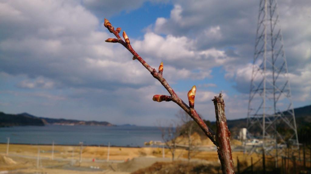 春に向けたつぼみ